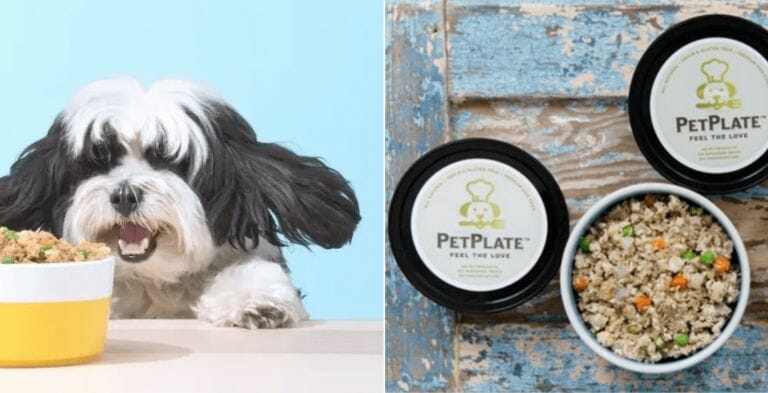 Ollie vs Petplate   Review & Comparision   For 2021 ( Updated Buying Guide!)